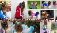 Игра Спечелете дрешка за куче по избор
