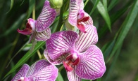 Игра Спечели орхидея по избор