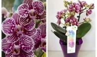 Игра Спечели подарък орхидея
